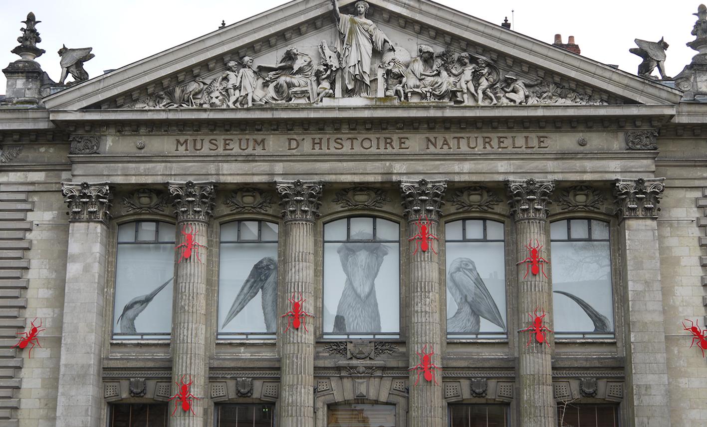 museum d'histoire naturelle nantes fourmis
