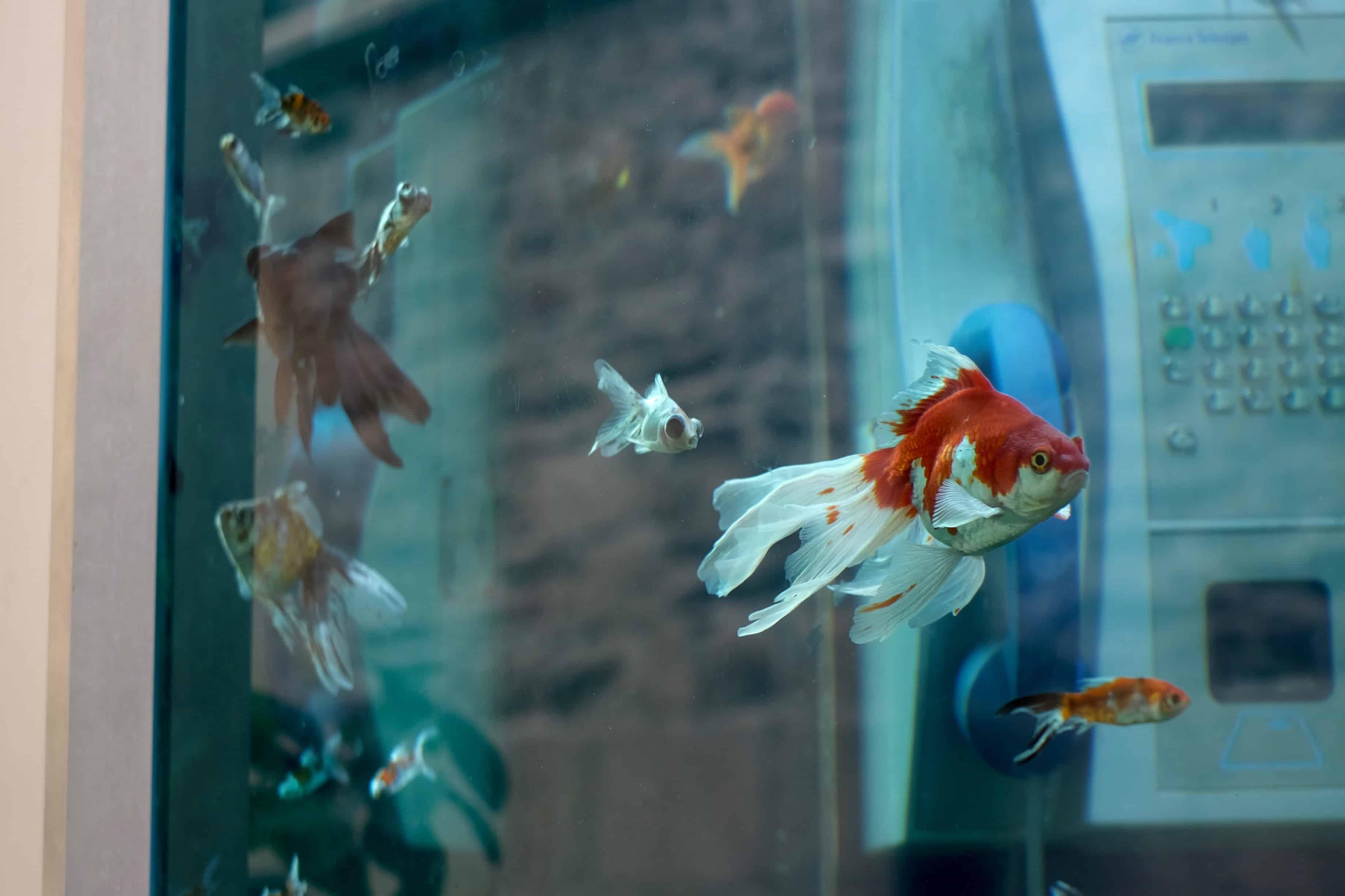 aquarium-cabine-voyage-a-nantes-2016