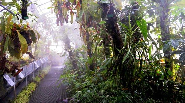Amazonuit 2019 : nocturnes au Jardin des Plantes ! - BigCityLife