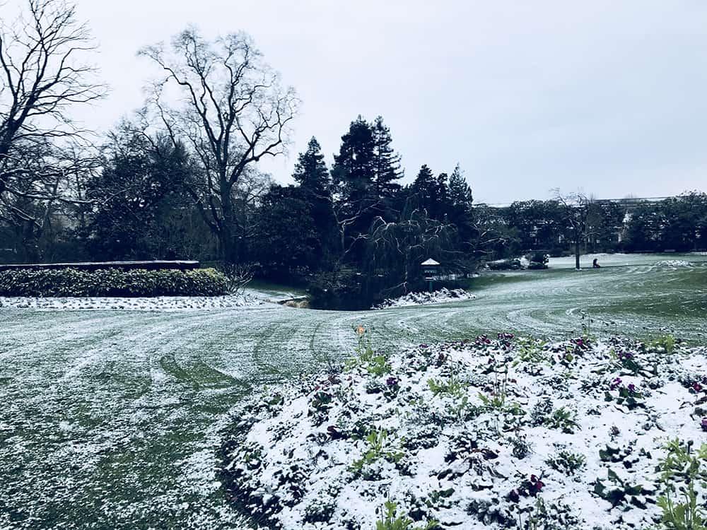 jardin des plantes neige