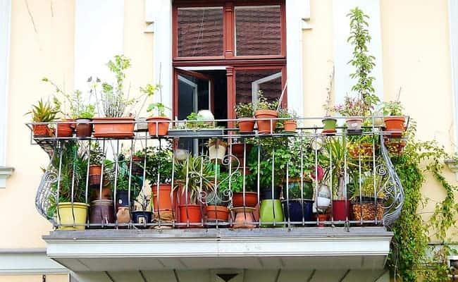 vente de plantes