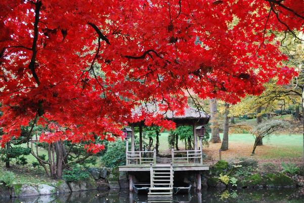 le plus grand jardin japonais d'Europe parc oriental de maulevrier 1