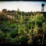 jardin des ronces