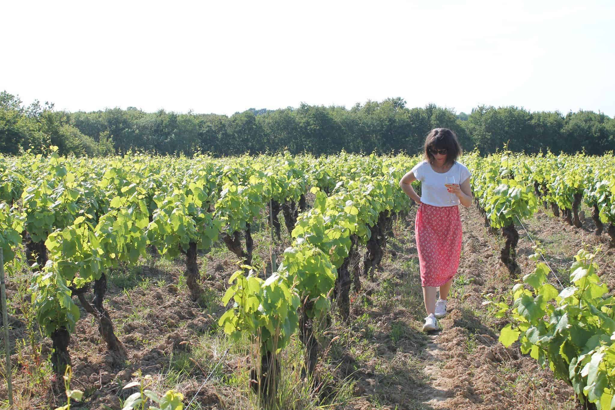 naow excursions apero soiree vignoble
