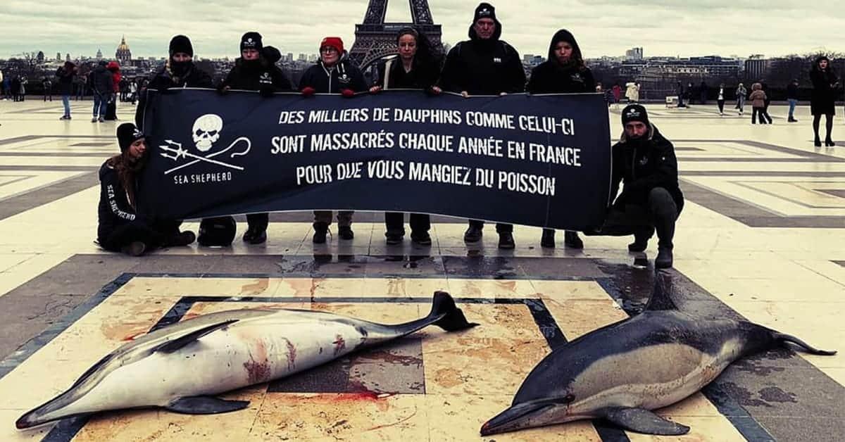 sea sheperd marche de talensac nantes 2020 dauphin