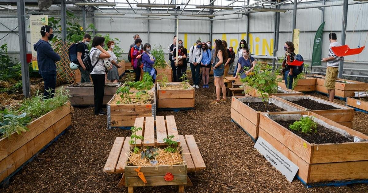 agronaute sauge cours de jardinage pour adultes