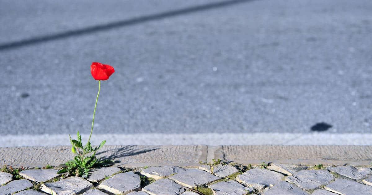ma rue en fleurs graines gratuites nantes 2020 2