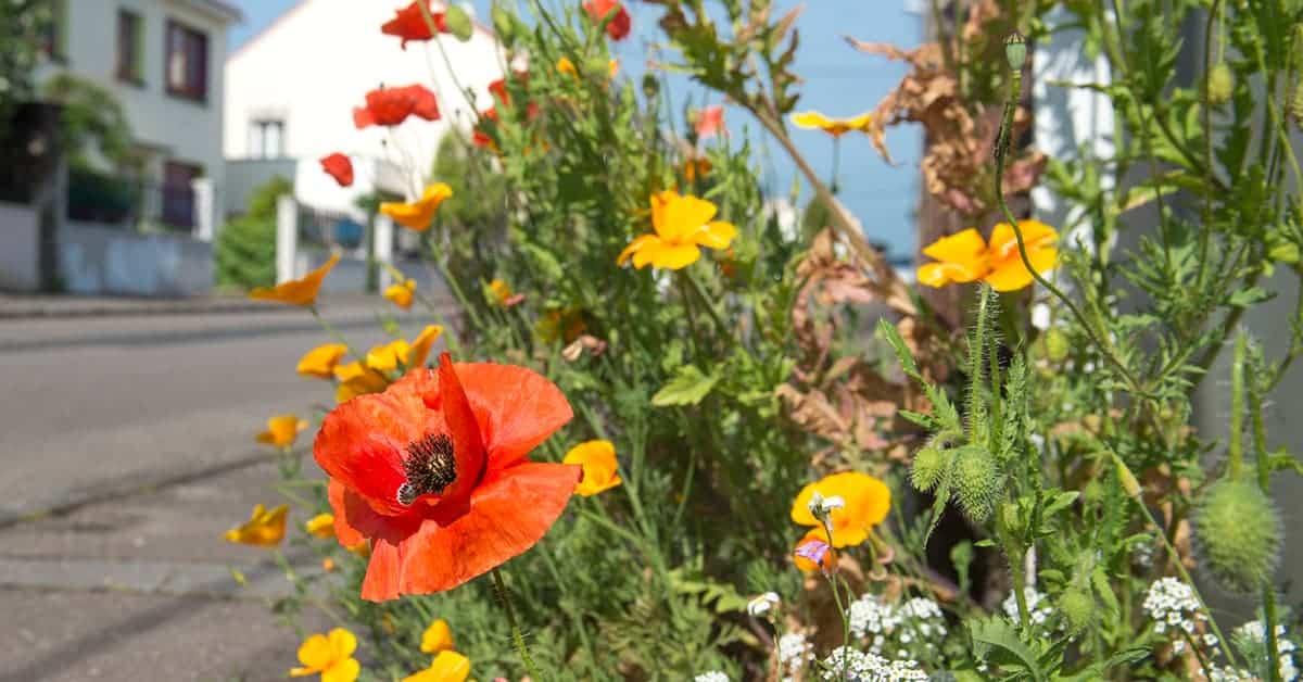 ma rue en fleurs graines gratuites nantes 2020