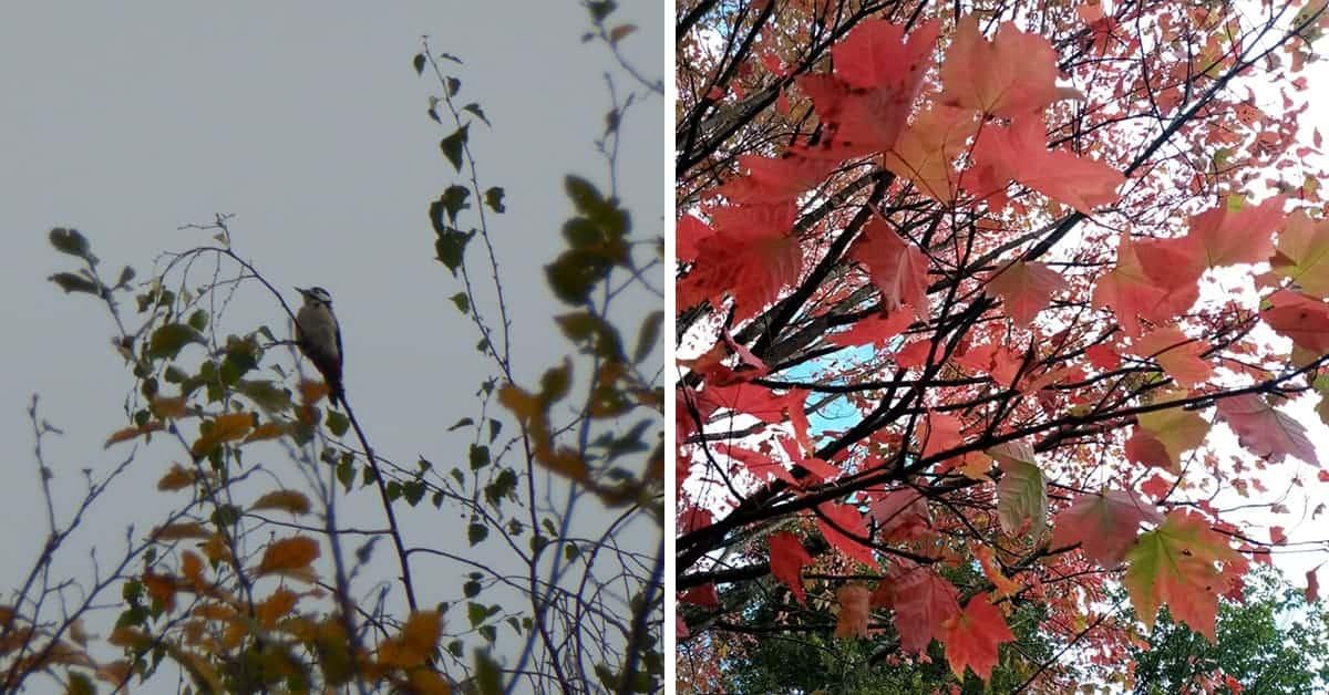 foret de touffou balades 20 km observer les oiseaux 2020