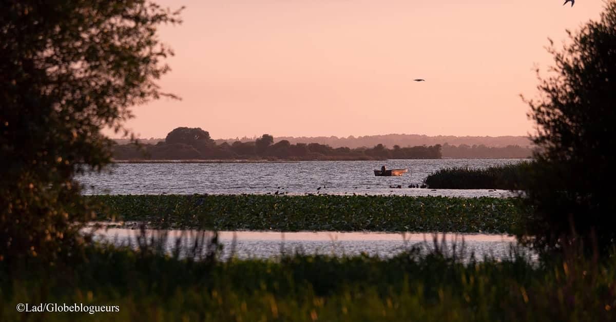 lac de grand lieu observer les oiseaux nantes
