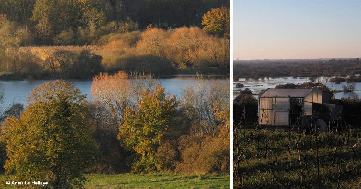 Erdre-bois-de-la-Desnerie-balades-20 km-oiseaux-nantes